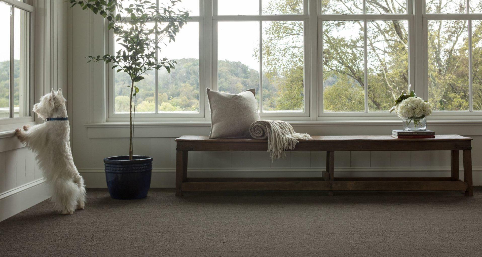 Carpet Johnson Furniture Mattress Mankato Mn